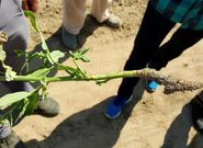 Relacja ze szkolenia - Rozpoznawanie agrofagów w uprawach rolniczych