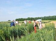 Wizyta uczestników konferencji na poletkach i polach IHAR-PIB