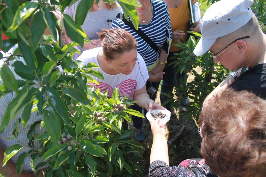 Doradztwo coraz bliżej integrowanej ochrony roślin