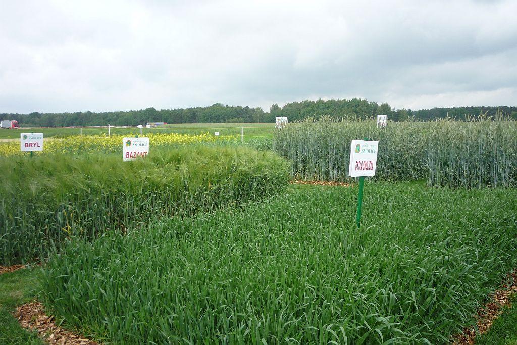 Wystawa Polskie Zboża - Zielone Agro Show